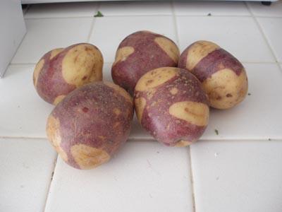 Hybrid Potatoes